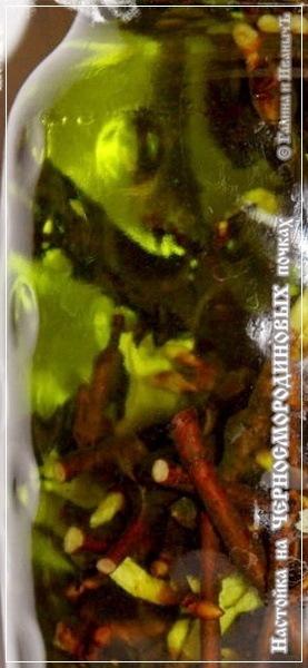 Настойка на черносмородиновых почках – кулинарный рецепт