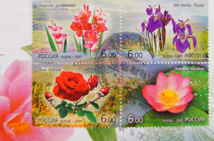 Картинки цветы для ани