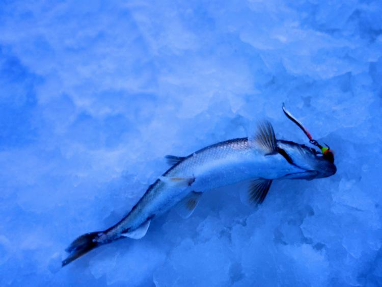 дойка для рыбалки